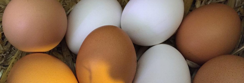 Bio-Eier aus Konradsdorf