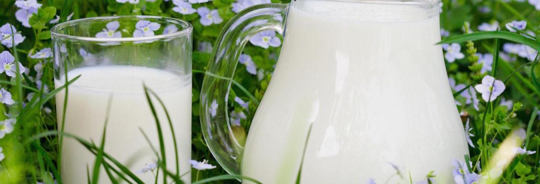 Tagesfrische Bio-Milch von Hof